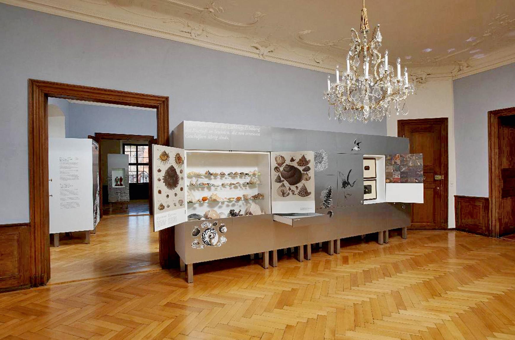 Nouveau Château de Meersburg, Cabinet de produits naturels; l'image: Staatliche Schlösser und Gärten Baden-Württemberg, Arnim Weischer
