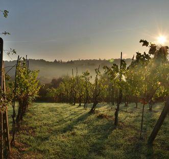 Vines in twilight. Image: Pixabay
