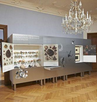 Collection de coquillages et de gastéropodes, cabinet d'Histoire naturelle, nouveau château de Meersburg
