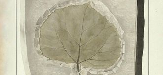 Drawing of a fossilized leaf by Gatschet, part of the prince-bishops' collection. Image: Baden State Library Karlsruhe