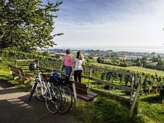 Zwei Radfahrer in den Meersburger Weinbergen